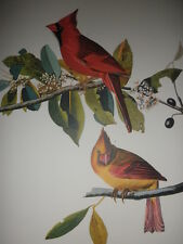 """Cardinal Grosbeak""; from 'THE AUDUBON FOLIO' - quality 14""x17"" print/poster"
