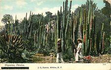c1910 Postcard; Organos Mexico, Pipe Organ Cactus, Baja California, Unposted