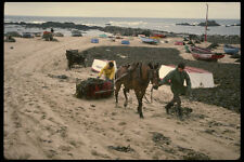 256059 Sleds Of Kelp Being Hauled Up Coast A4 Photo Print