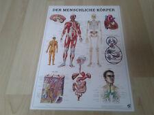 NEU Anatomie Lehr Poster Der menschliche Körper