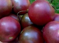 Tomato 'Brown Cherry Berry' Small Sweet Heirloom 25 Seeds