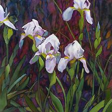 KMSchmidt 16x16 Ltd Ed ART PRINT craftsman bright floral WHITE IRIS garden
