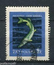 POLOGNE, 1958, timbre 930, POISSON BROCHET, oblitéré