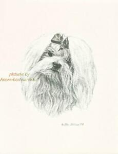 #226 MALTESE with bow portrait dog art print * Pen & ink drawing by Jan Jellins