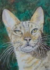 Savannah Kitten Sun Kissed Cat Original Art Aceo Miniature Oil Painting Kari