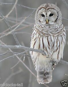 Owl GLOSSY Photo Picture Wall Decor / Print * PICK YOUR SIZE *