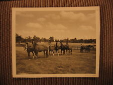 American Saddlebred Brood Mares & Colts of Castleton Farms Original Horse Photo
