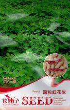 10 Original Pack Seeds Four-grains Red Peanuts Seed Arachis Hypogaea Herb M007