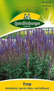 Quedlinburger Saatgut - Ysop Samen