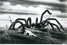 KINGDOM OF THE SPIDERS  1975 VINTAGE PHOTO ORIGINAL #2  SCI-FI  HORROR B-MOVIE