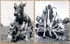 1940s Young Country Farm Boy Girl Milking Cow in Field From Front & Back Photos
