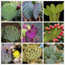 10pcs Cactus Opuntia mixed seeds Edible cactus Fruit