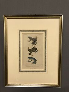 """Antique 1834 Hand Colored Frog Engraving G. Henderson Old Bailey 15"""" X 12"""""""