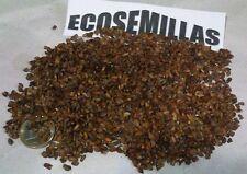 Cipres cementerio, ITALIANO Cupressus sempervirens 150 semillas COMPRA 2 ENVÍO 3