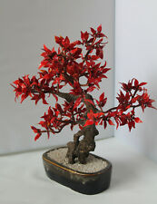 More details for large vintage chinese glass bonsai tree - 13.4