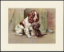 ENGLISH SPRINGER SPANIEL AND KITTEN CHARMING DOG PRINT MOUNTED READY TO FRAME