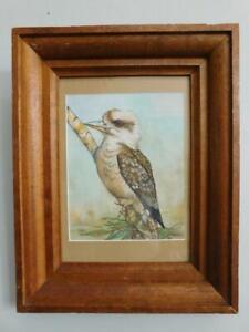 Australian Kookaburra B Barling Watercolour Painting in Frame c1900s Federation