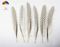 100 Pcs Natural Pheasant Tail Feather 4-10 Inch / 10-25 Cm Carnival Diy Carnival