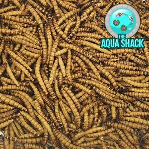 Premium Dried Morio Worms | Koi Treats Garden Pond Fish Food Protein Insects