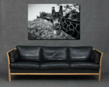 Giraffe Close Up Face Skin Elegant Print Canvas Art Living Room Home Large Grey
