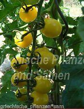 Lollipop AMARILLOS CEREZA Tomate Cocktail tomaten 10 Semillas Frescas balcón