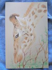 Original colored pencil drawing Giraffe