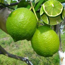 20Pcs Lemon Lime Seeds Succulent Fruit Tree Home Garden Decor Plants Bonsai Seed