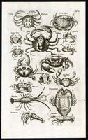 Antique Print-CRAB-LOBSTER-GUAIA-CUNURU-UCA UNA-GUARICURU-Jonston-Merian-1657