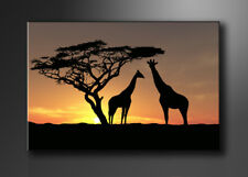 Bild - Marken Bilder aufhängfertig Afrika 80cm XXL 3 4034>