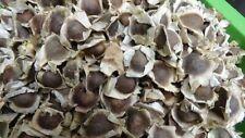 ❀ 25+ Semillas ❀ Moringa Oleifera ❀FRESCAS recolectada❀ 27-09-2019 ❀MAS REGALO ❀