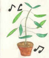 Tanzende Pflanze = Telegraphenpflanze-Codariocalyx motorius  Zimmerpflanze Samen