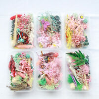 DIY Dried Flowers Bulk Mixed Natural Plants Handmade Handicraft Supplies Decor