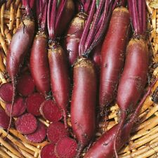 Vegetable - Beetroot - Cylindra Growers Pack - 1800 Seeds