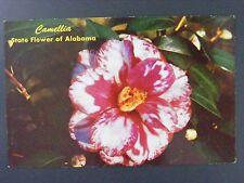 Alabama State Flower Camellia Vintage Color Chrome Postcard 1960s