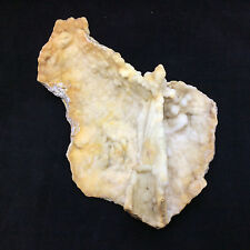 Agatized Fossil Coral 170777 257g Metaphysical Emotional Balance Healing