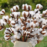 5/10Pcs Naturally Dried Cotton Stems Artificial Flower Floral Home Decoration