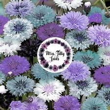 100 Samen Kornblume EISKÖNIGIN  Sorte Blumensamen Garten Blumen Essbare Blüten