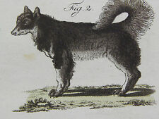 Dogs, c.1740 Copperplate Engraving, German #03