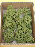Alberi e piante scure varie altezze teloxis aristata per modellismo - Krea 2401