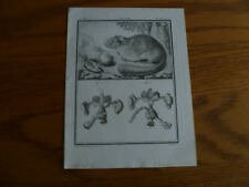 4 Etchings- Buffon 1749-Mammals-Hyena-Marten -Squirrel-Mouse-Laid paper
