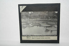 CHINESE GARDEN WITH LILLIES  GLASS LANTERN SLIDE ORIGINAL ANTIQUE ITEM