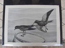 Original  Rex Brasher #107  Hand Painted   Print  Black Petrel  #107REX2 DSS