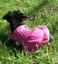 Top Angebot! Hunde Hündin Nicki Kleidchen XS Rücken 20-25cm Umfang 20-30 cm
