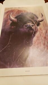 Sold Out Rare Signed and Numbered Vivi Crandall Bull Rush
