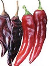 20 Mild Guajillo Pepper Seeds Usa Seller Mirasol Chili Peppers