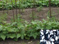 25 Etiquettes à Piquer PVC Jardin Fleur Plante Graines Plastique Feutre 14cm