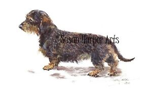 SALE Dachshund - Mini Wire Haired Signed Dog Print by Susan Harper Unmounted