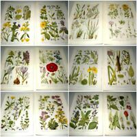 60 Wild Flower Book Plates - Removed from a Book. Perfect For Framing/Resale