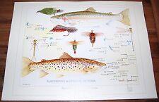 Fly Fishing Artwork - SIGNED Trevor Hawkins Print - Northwest & Central Victoria