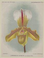 COGNIAUX GOOSSENS CYPRIPEDIUM AUREUM VAR. CYRUS ORCHIDEE ORCHIDS ORCHID BOTANICA